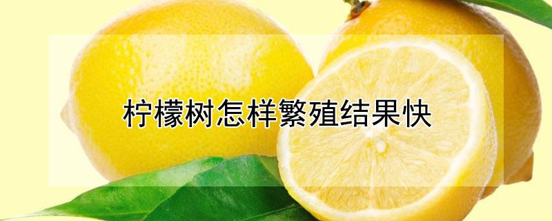 柠檬树怎样繁殖结果快