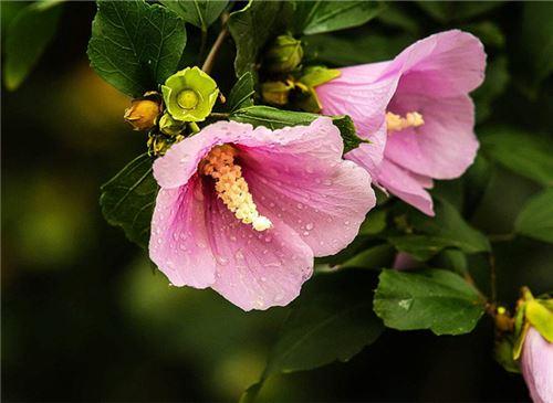 秋天有什么花