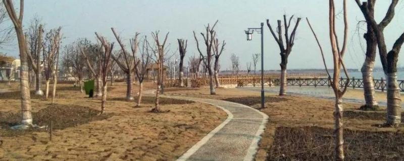 冬季移栽树木怎样浇水